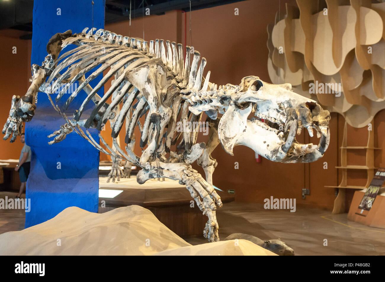 BELO HORIZONTE, MG - 23.07.2015: Museu de Ciências Naturais - PUC MINAS - Coração Eucarístico - BH - MG. (Foto: Mourão Panda / Fotoarena) Stock Photo
