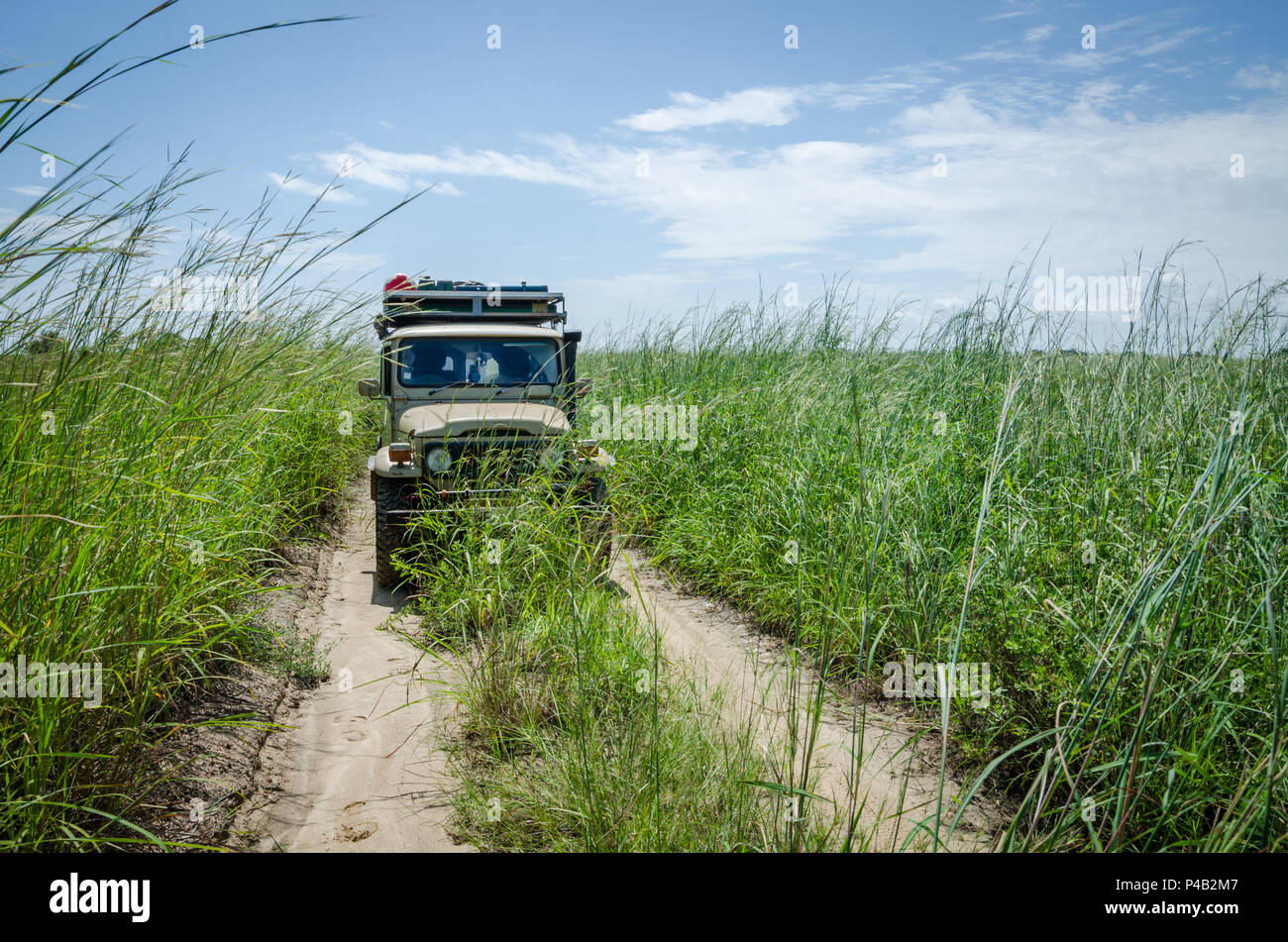 Classic 4x4 offroad car on overgrown track with high grass between Ambriz and Luanda in Northern Angola, Africa. - Stock Image