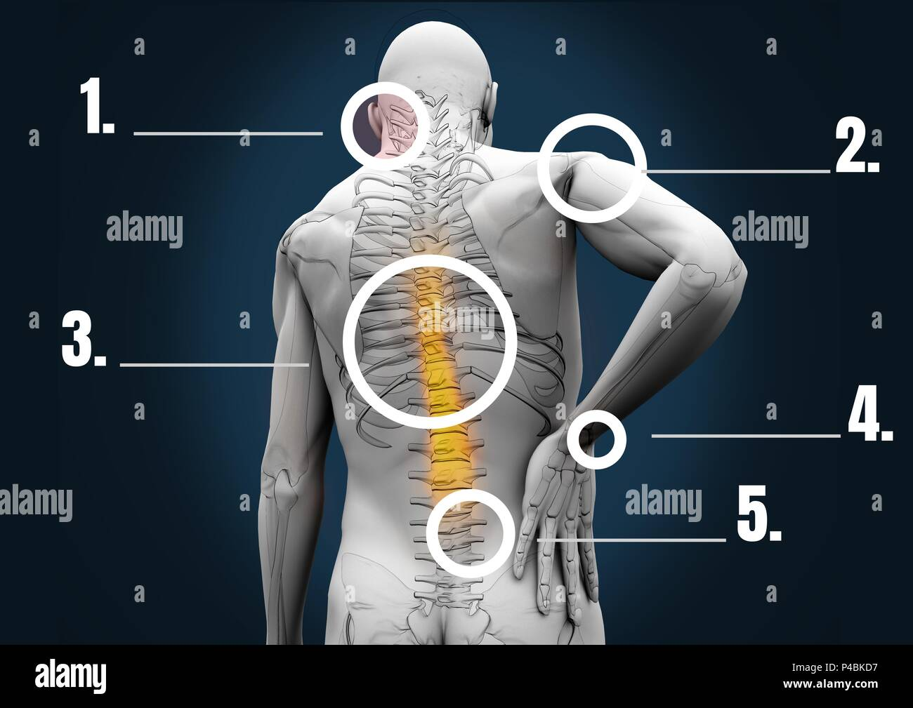 Composite image of human bone structure Stock Photo: 209239779 - Alamy