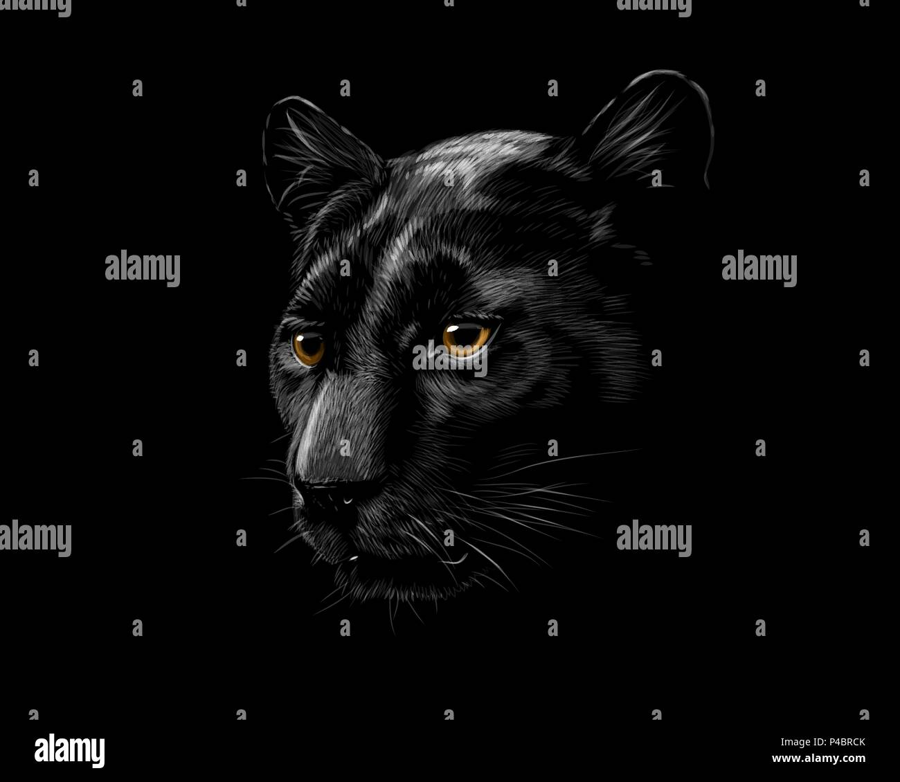 Head of a black panther - Stock Vector