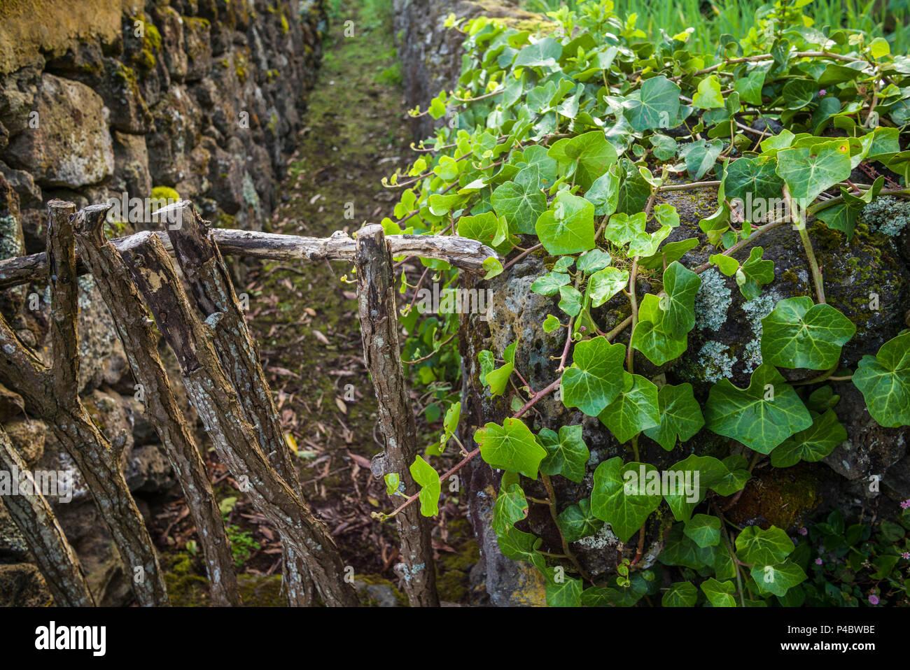 Portugal, Azores, Terceira Island, Sao Bartolomeo, farm fence - Stock Image
