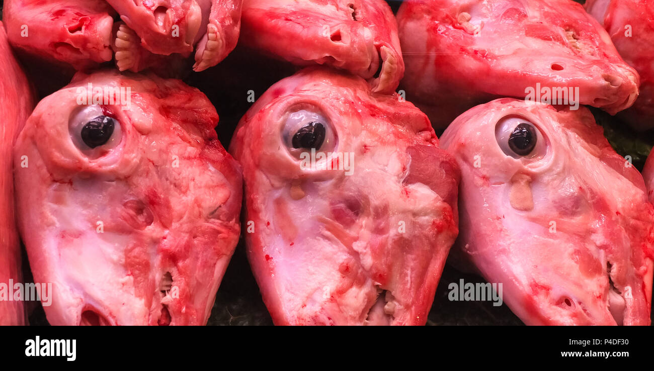 Sheeps Heads on Display in a Barcelona Market. within a refridgerater all pointing downwards with three prominent eyes staring in the image. A Good im - Stock Image
