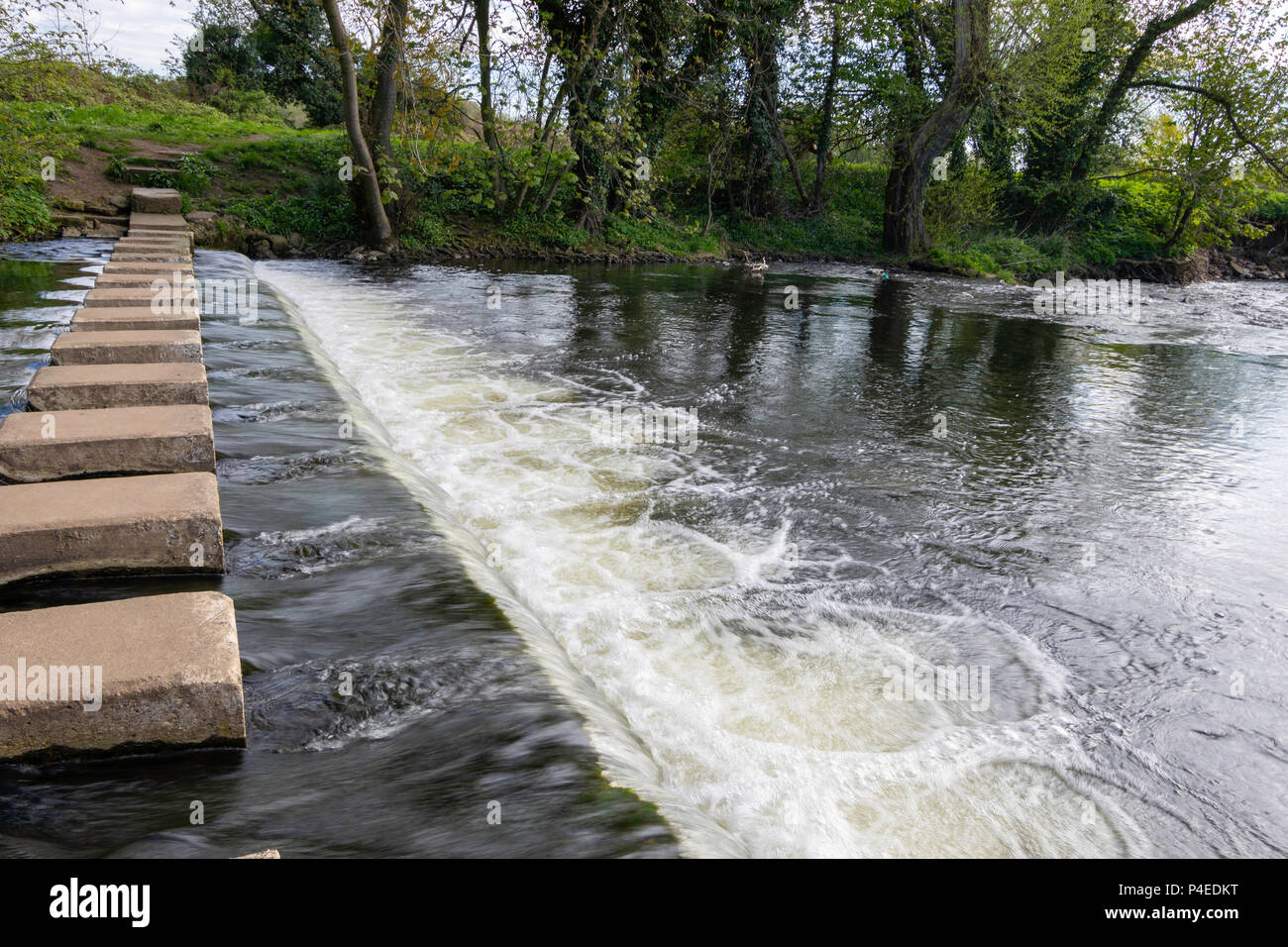 Stepping stones over the river Skell at Ripon,North Yorkshire,England,UK. - Stock Image
