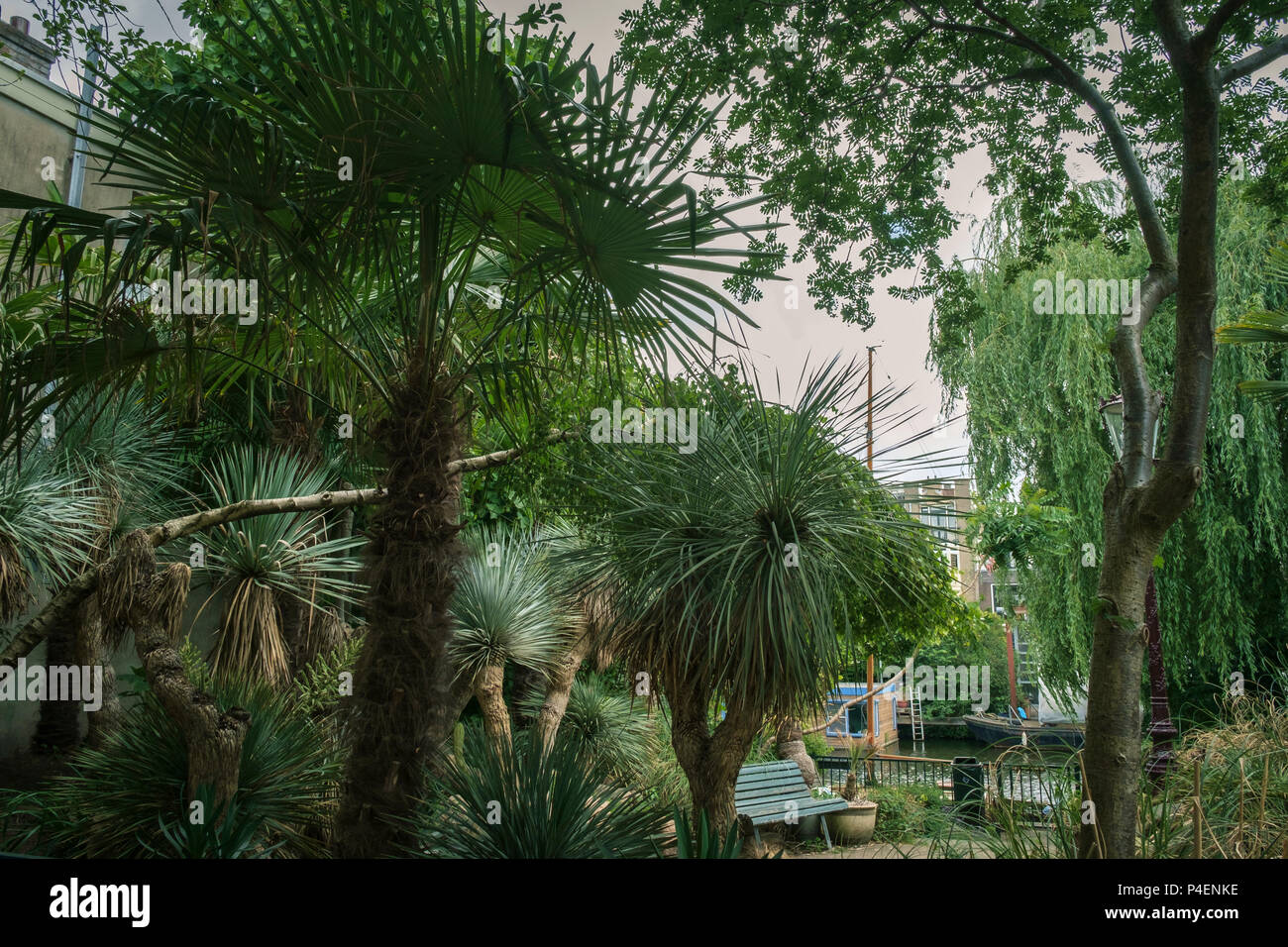 Waterside Plants High Resolution Stock Photography And Images Alamy