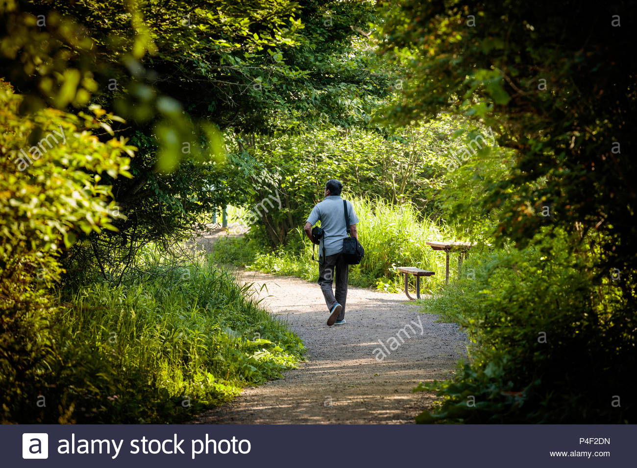 Shinrin-yoku forest bathing forest healing forest therapy shinrin yoku at Lynde Shores Conservation Area in Whitby Ontario Canada - Stock Image