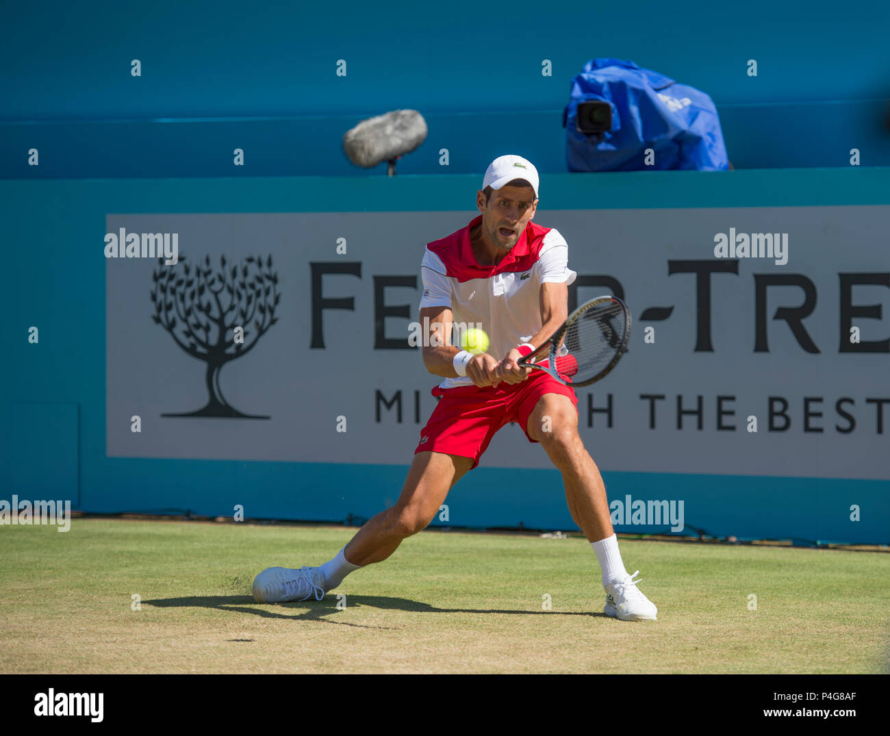 The Queen's Club, London, UK. 22 June, 2018. Day 5 quarter-final match on centre court with Adrian Mannarino (FRA) vs Novak Djokovic (SRB). Credit: Malcolm Park/Alamy Live News. - Stock Image