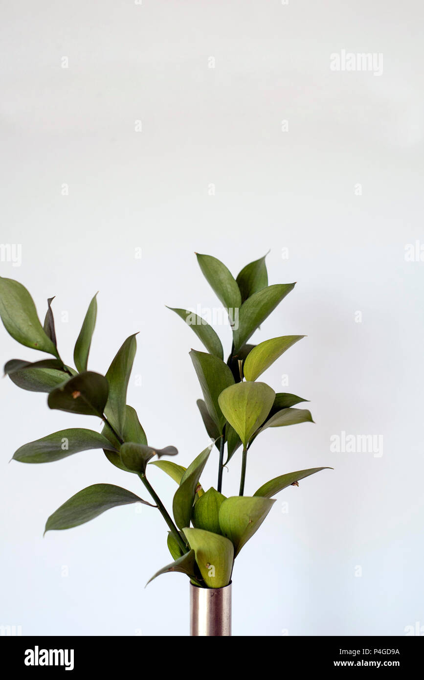 Ruscus Greenery, Filler Foliage as Minimalist Home Decor - Stock Image