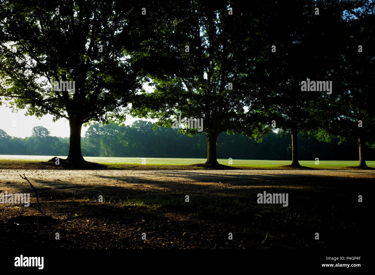 A row of mighty oaks line the drive at Lake Benson Park in Garner North Carolina as the early morning sun filters through the canopy on the first day  Stock Photo