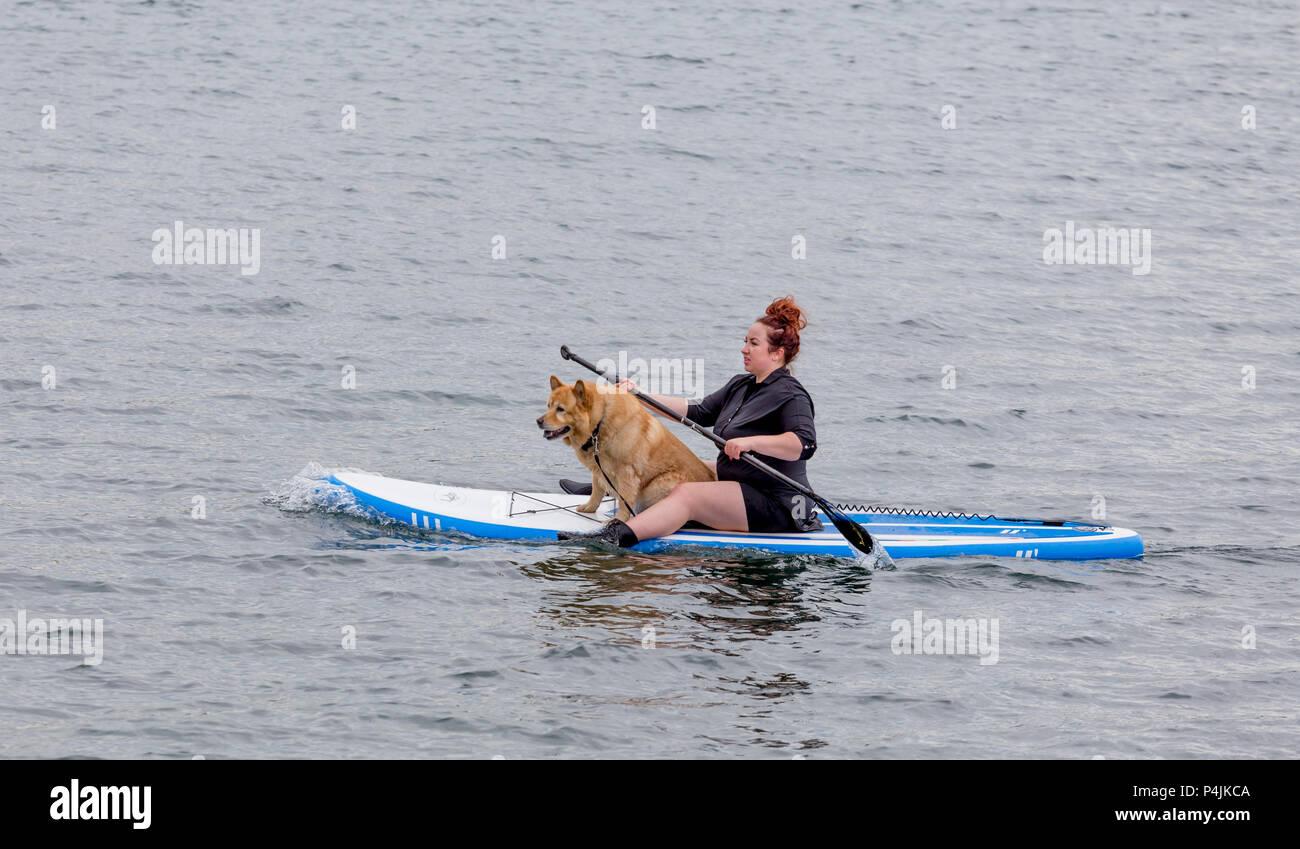 Dog Boarding East Austin