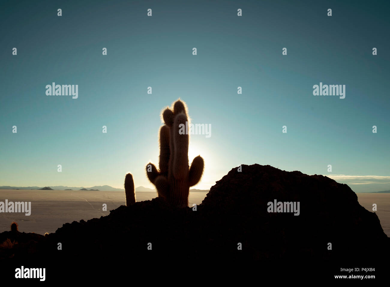 Cactus silhouette in the sunset. Fish Island (Isla del Pescado) in Salar de Uyuni, Bolivia. - Stock Image