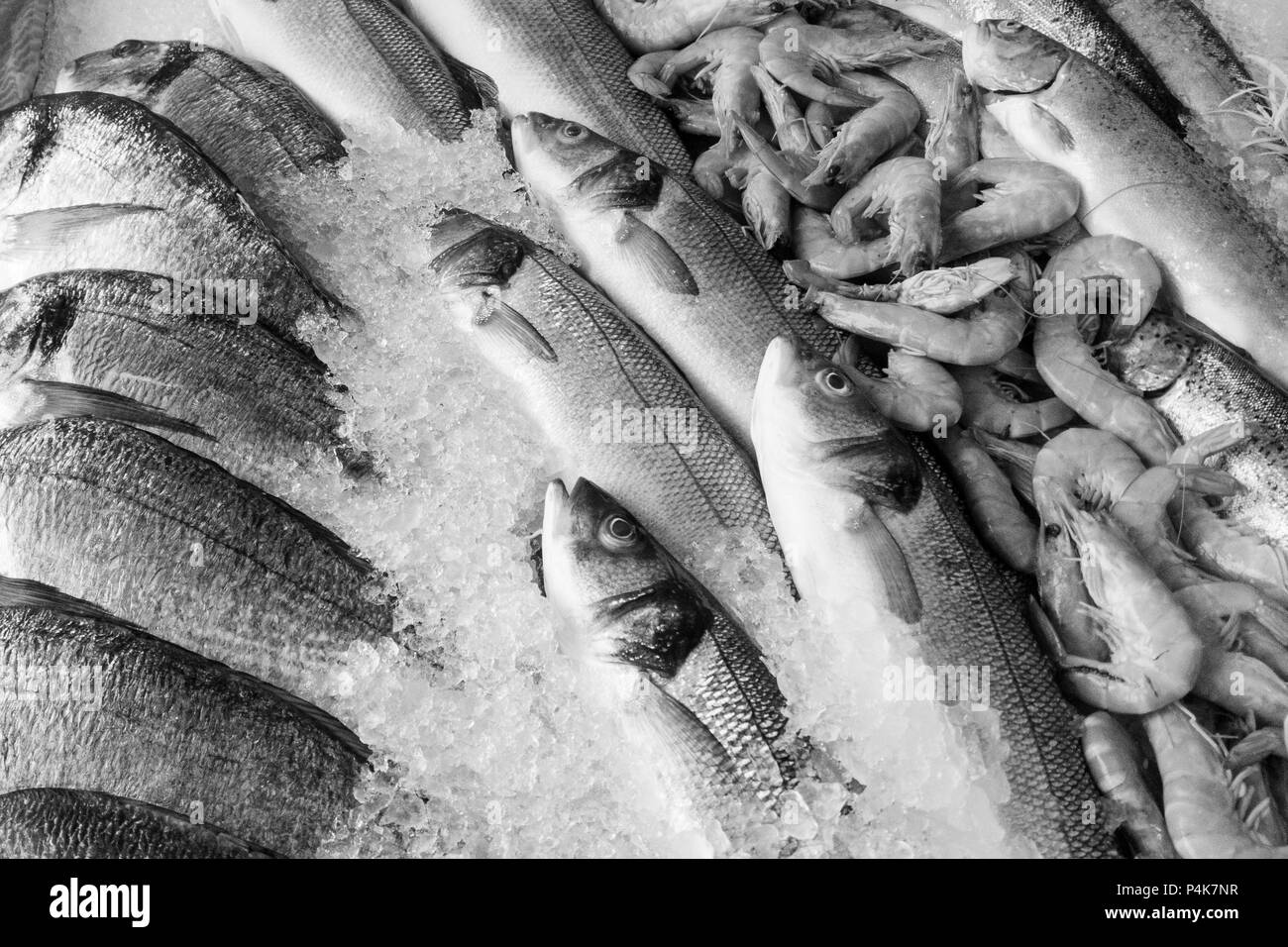 Black and white image of frozen fishes and prawns on ice in fish market - Stock Image