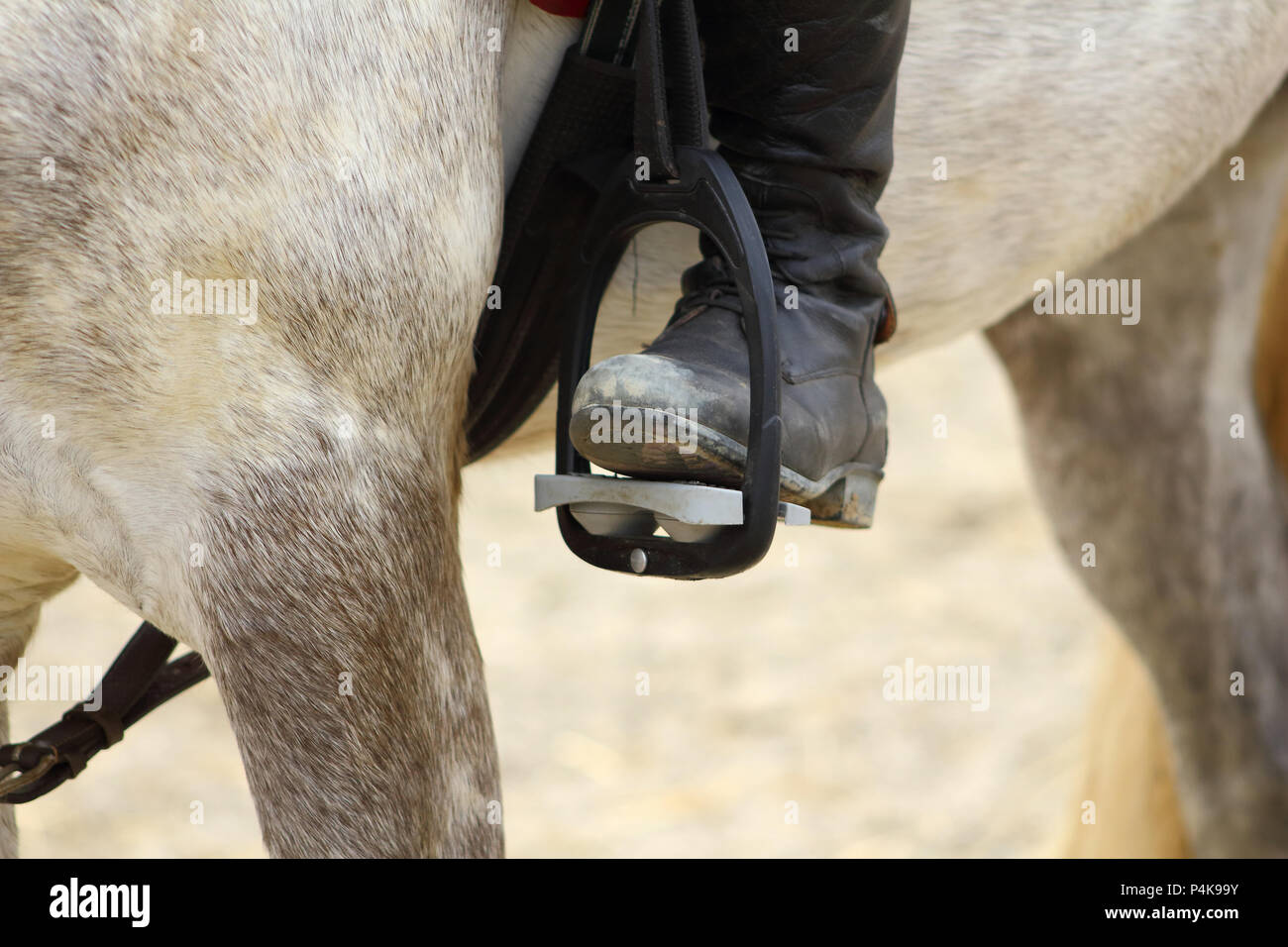 a black boot of rider in the stirrup tighten on the horse, the foot in the stirrup Stock Photo