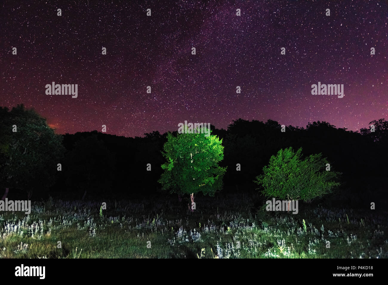 Starry sky over the forest - Stock Image
