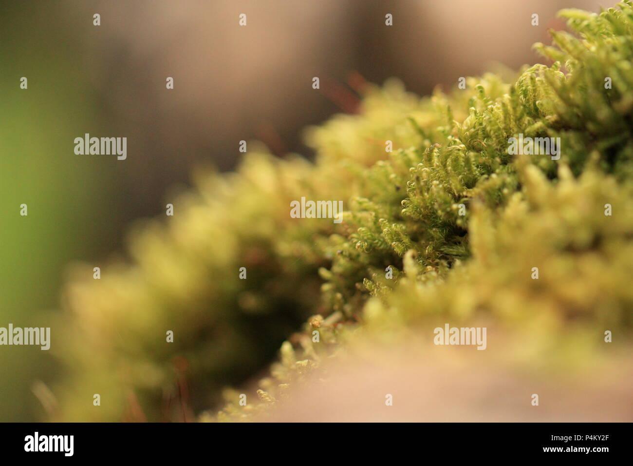 Mossy - Stock Image