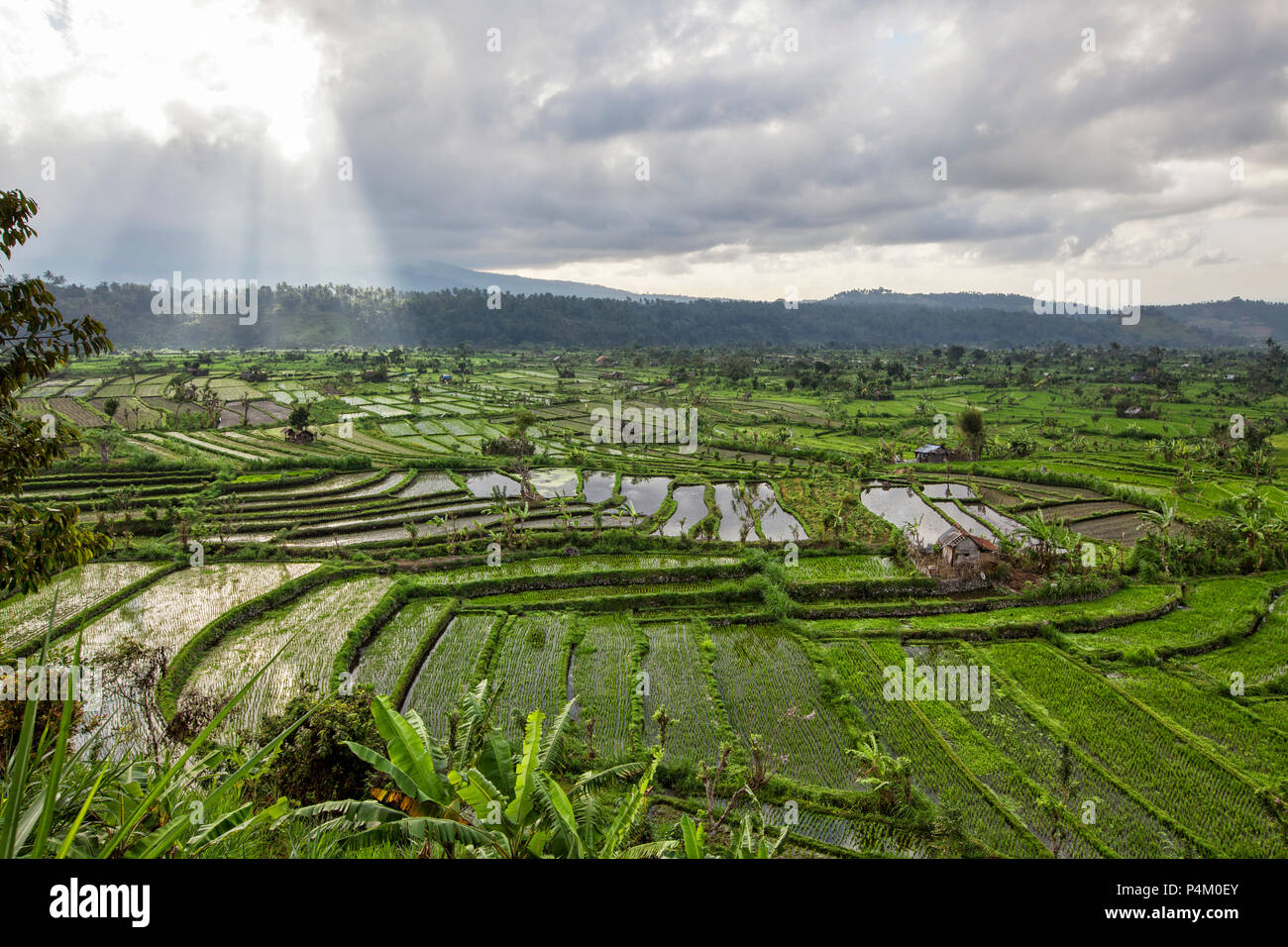 Rice terraces in rice fields on mountain of twilight - Stock Image
