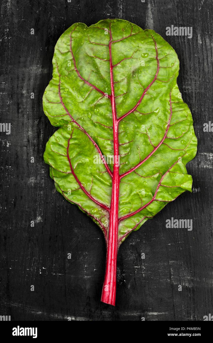 A leaf of rhubarb chard on a dark surface - Stock Image