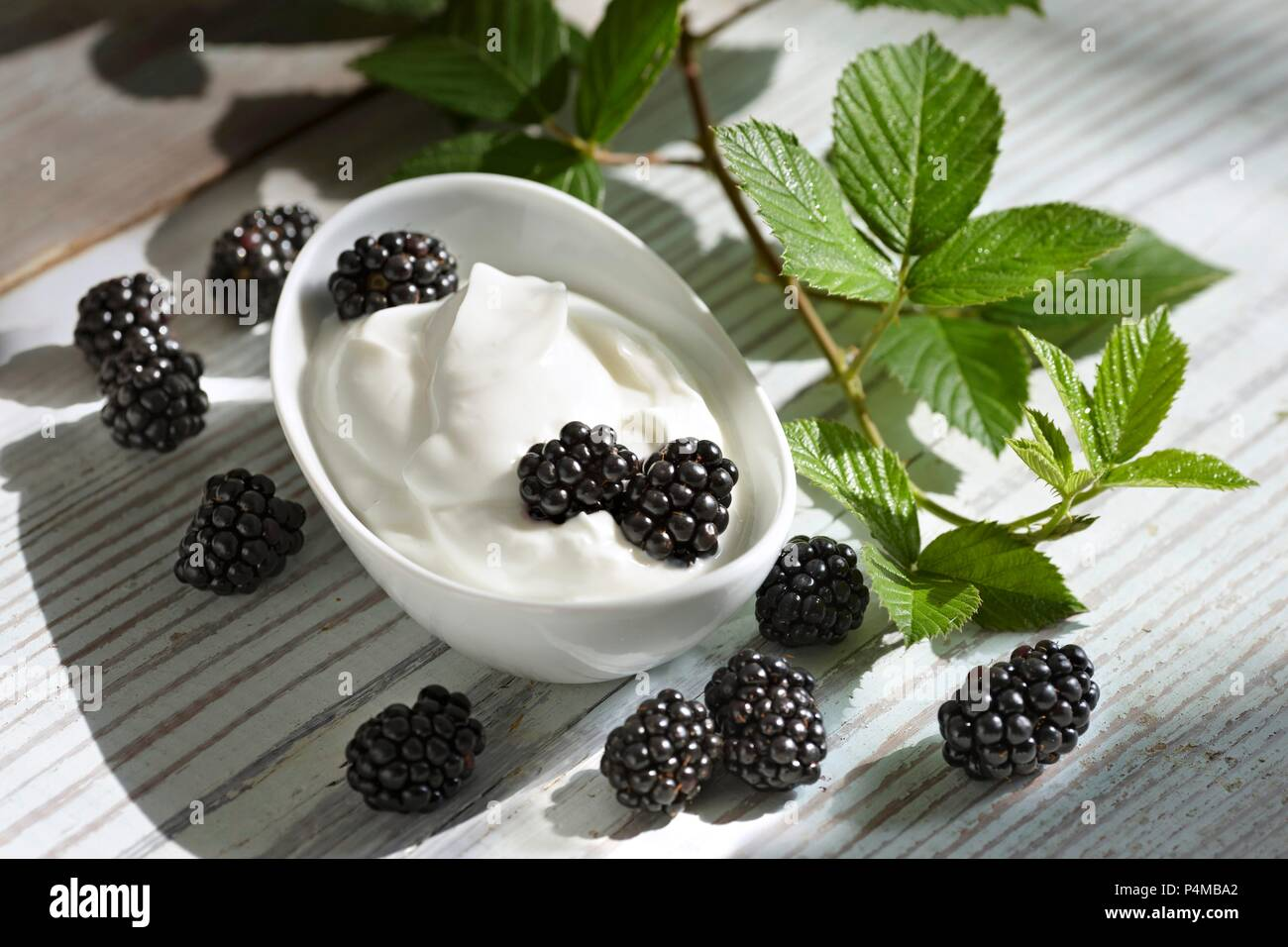 Yogurt with blackberries and leaves - Stock Image
