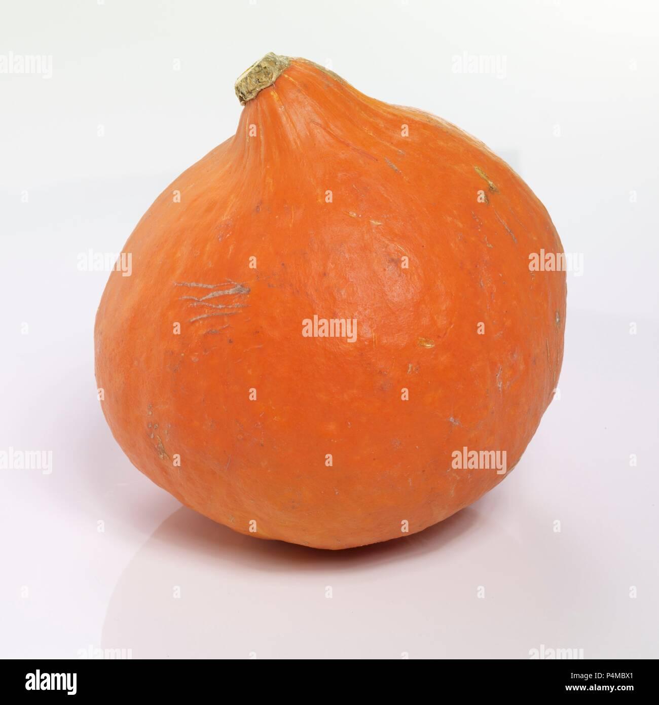 A whole Hokkaido pumpkin - Stock Image