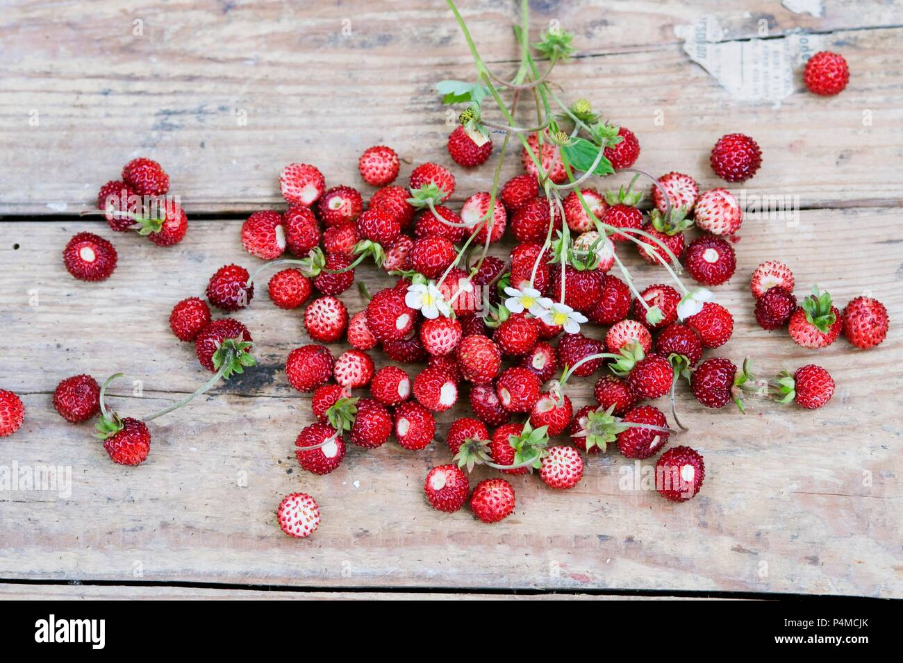 Wild strawberries with leaves and flowers on a wooden surface - Stock Image
