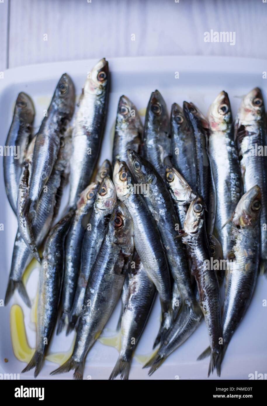 Anchovies with olive oil Stock Photo