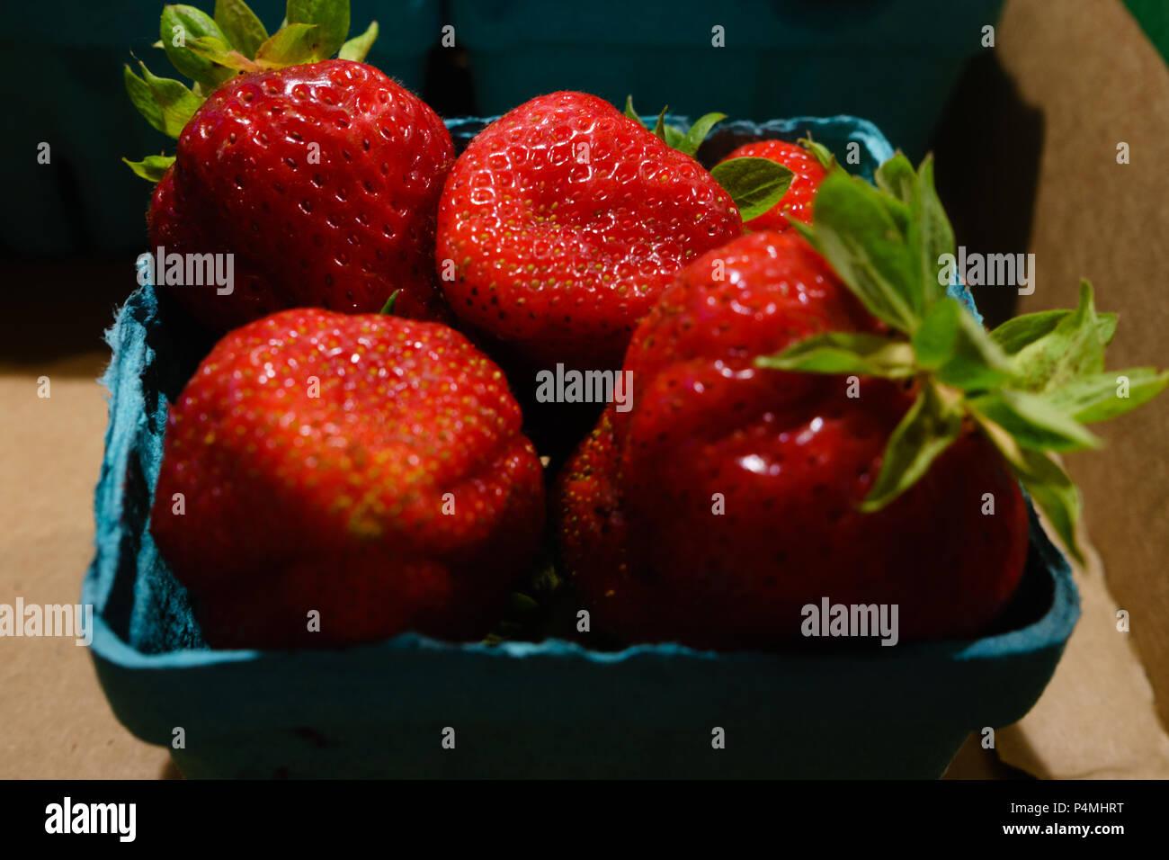 Picked strawberries - Stock Image