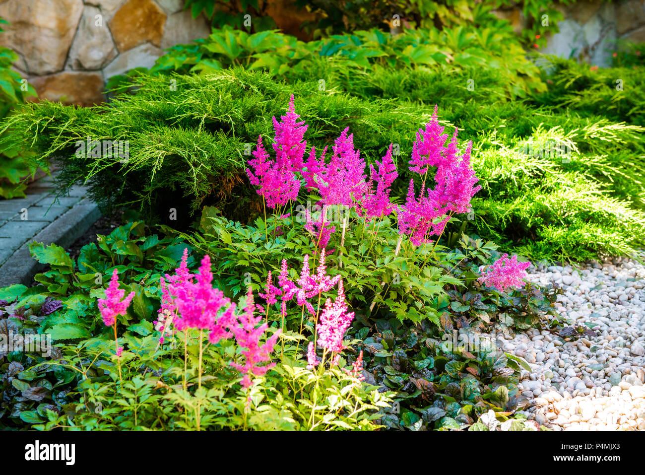 Flower Flowers Plant Plants Landscape Design Stock Photos Flower