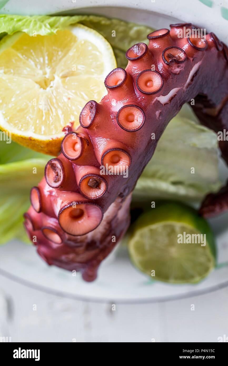 An octopus tentacle (close-up) - Stock Image