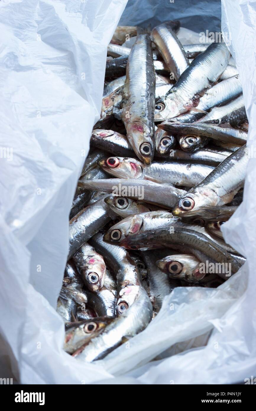 Fresh anchovies in a plastic bag - Stock Image