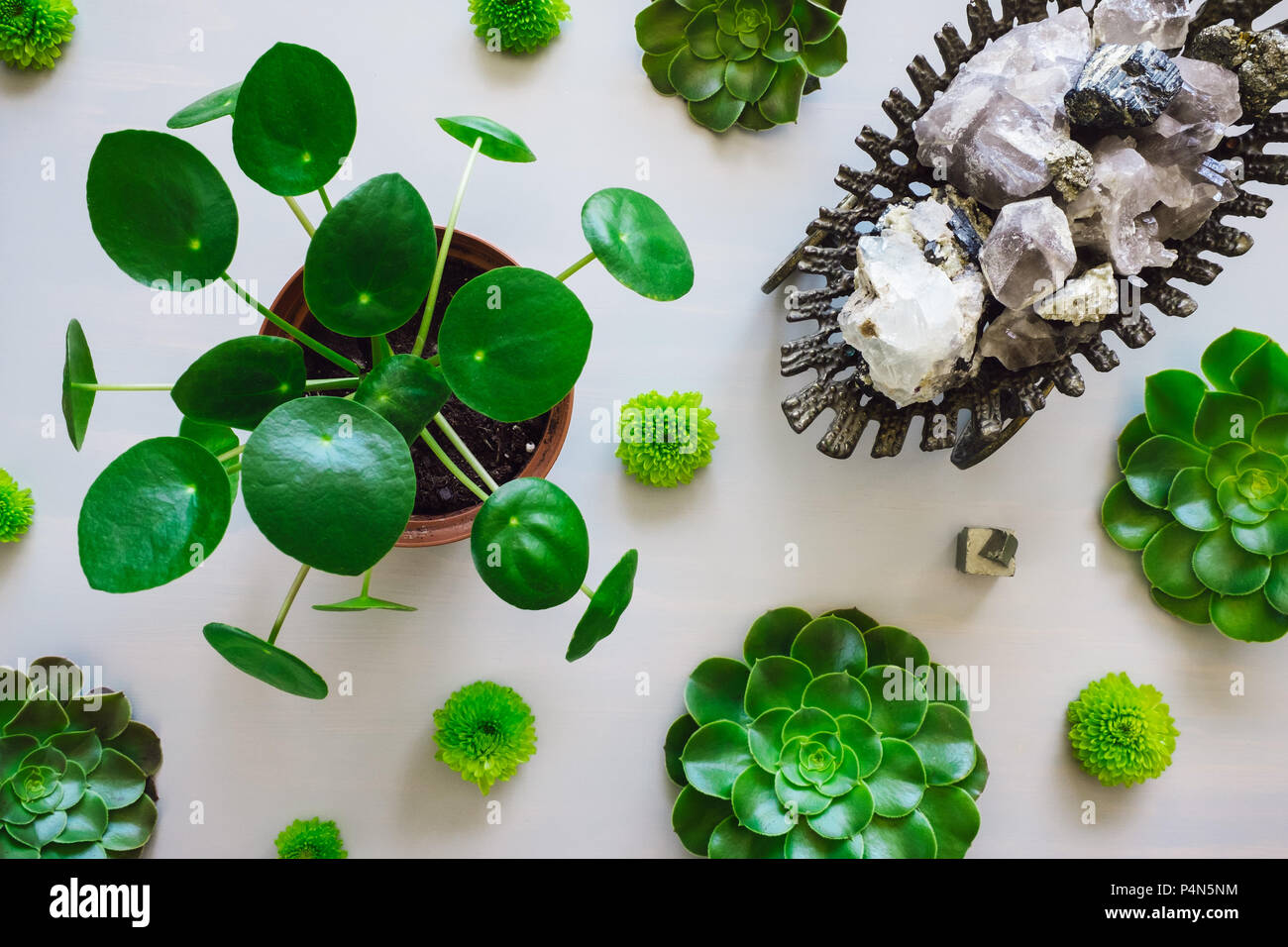 Pilea Plant, Succulents and Chrysanthemums Arranged with Antique Vessel Containing Quarts, Flourite, Black Tourmaline, Pyrite and Mica Stock Photo