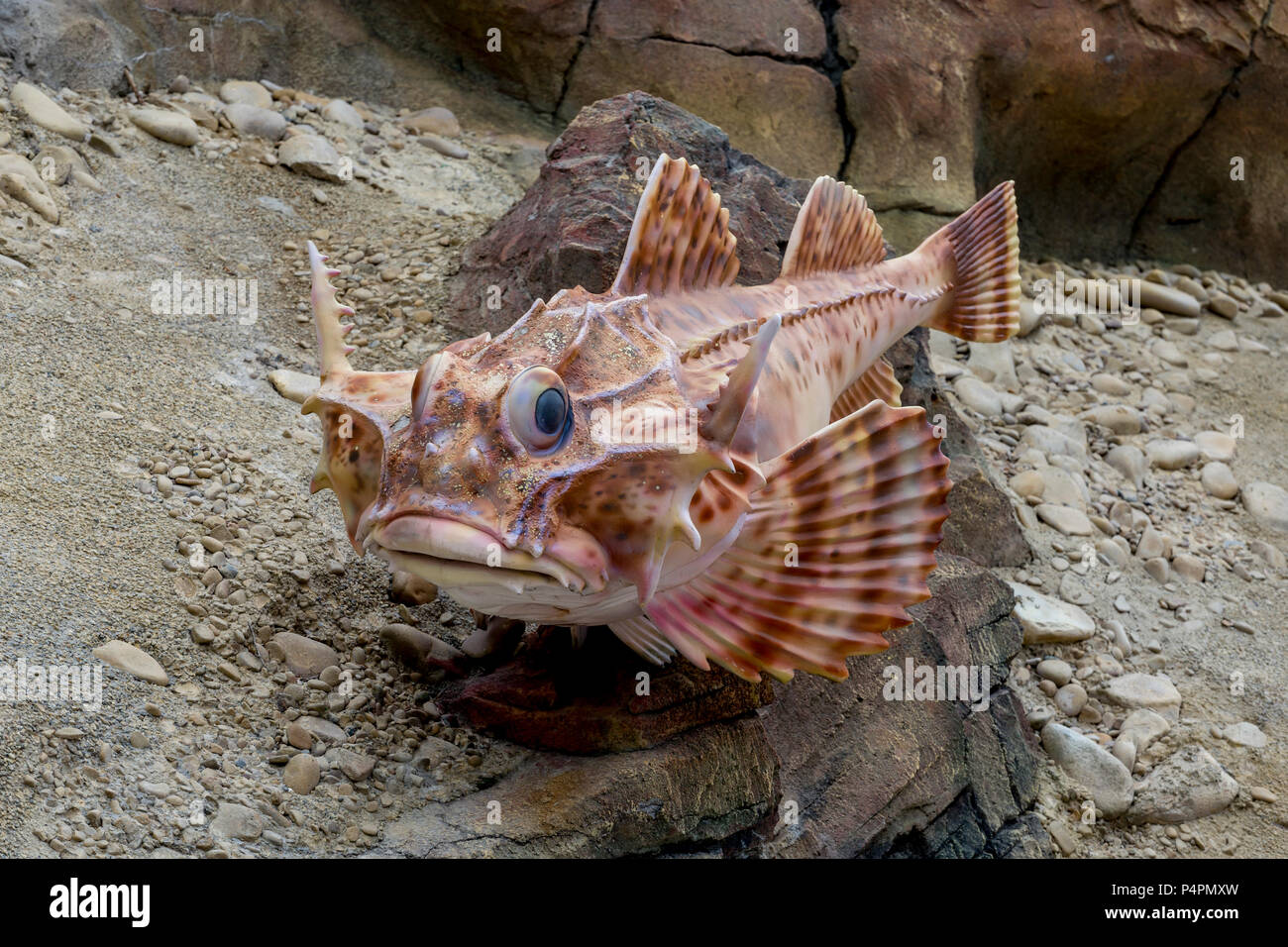 Russia, Vladivostok, 05/26/2018. Sculpture of Goby fish (Gobiidae) on a rock in a marine amusement park. Placed in amusement park of Oceanarium on Rus - Stock Image