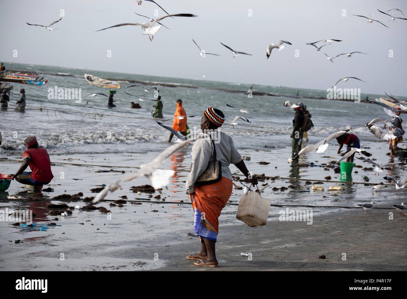 A woman is carrying a bucket to discard seafood residues to feed grey-headed gulls flying overhead at the Tanji beach, The Gambia, West Africa. - Stock Image