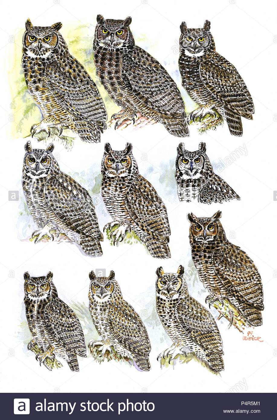Owls Illustrations Stock Photos & Owls Illustrations Stock Images ...