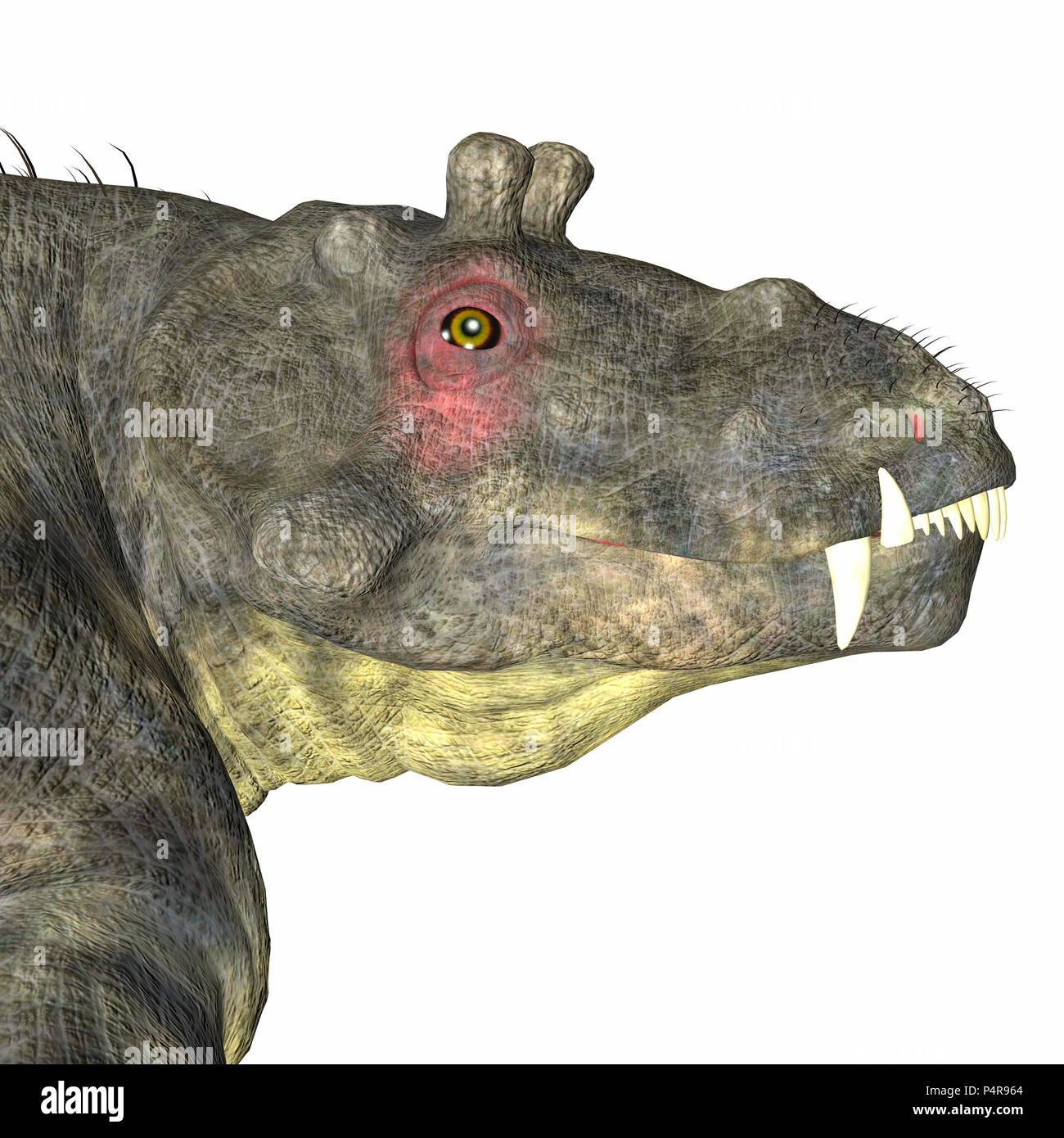 Estemmenosuchus uralensis was an omnivorous therapsid dinosaur that lived in the Permian Period of Russia. - Stock Image