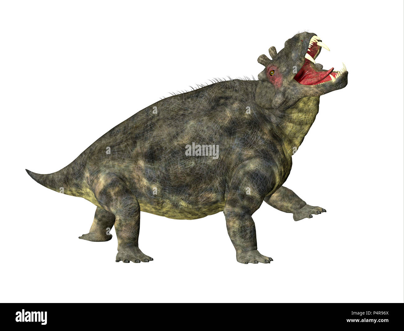 Estemmenosuchus uralensis Dinosaur Side Profile - Estemmenosuchus uralensis was an omnivorous therapsid dinosaur that lived in the Permian Period. - Stock Image