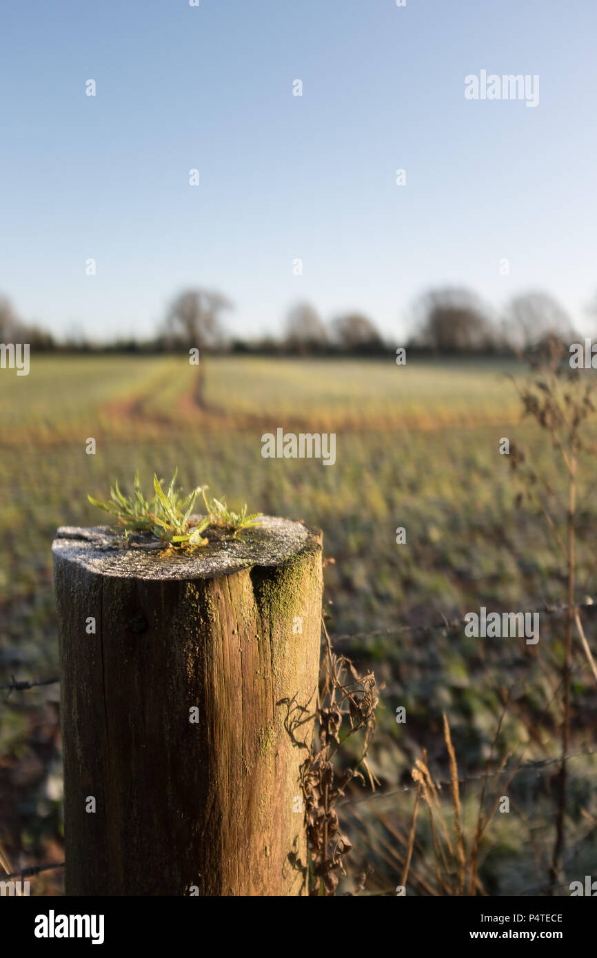 Fence post leading into field early morning Frost, Devon, England, UK. - Stock Image