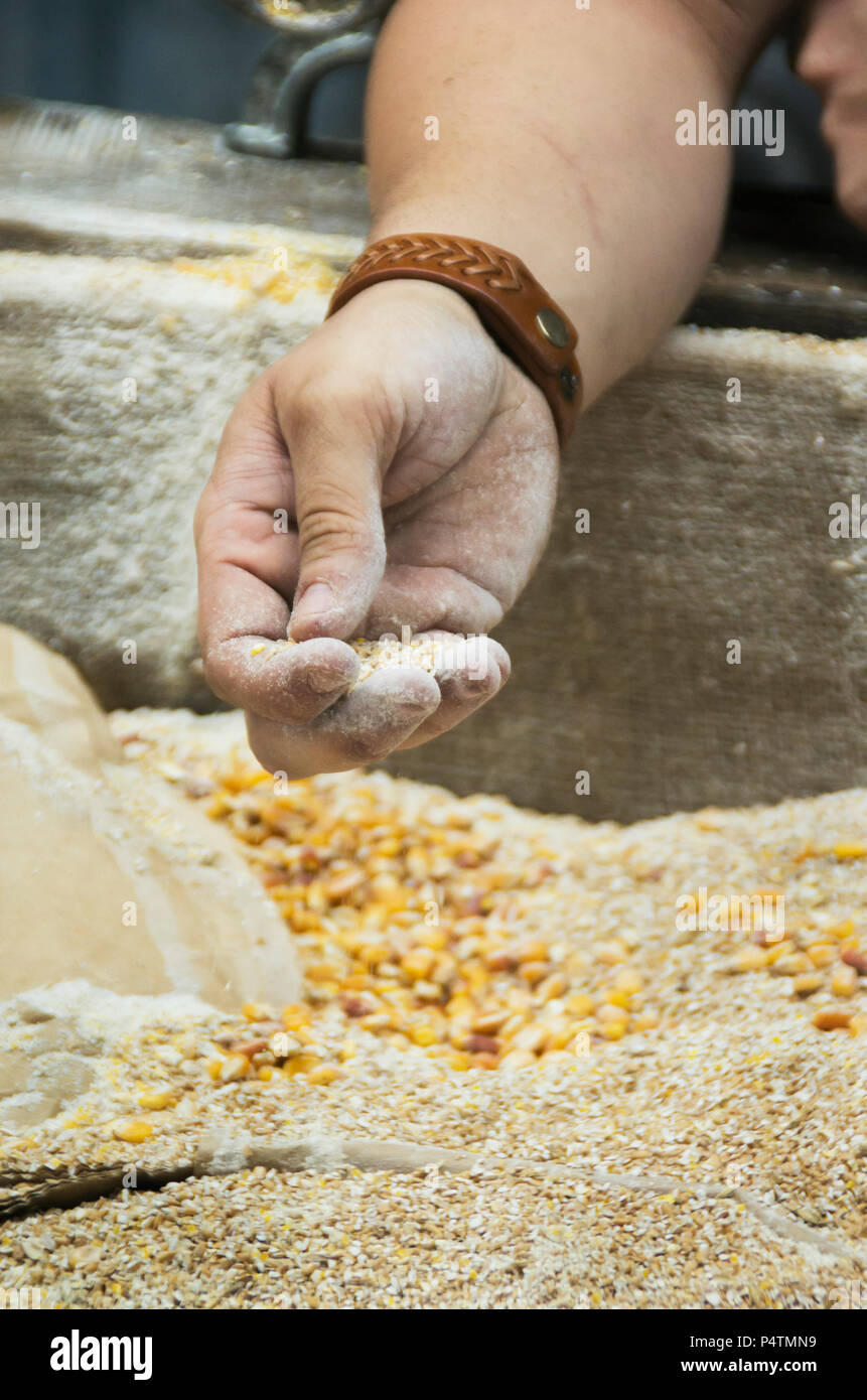 Corn is ground into the second stage for producing legal Moonshine in Pigeon Forge ,Tn. - Stock Image