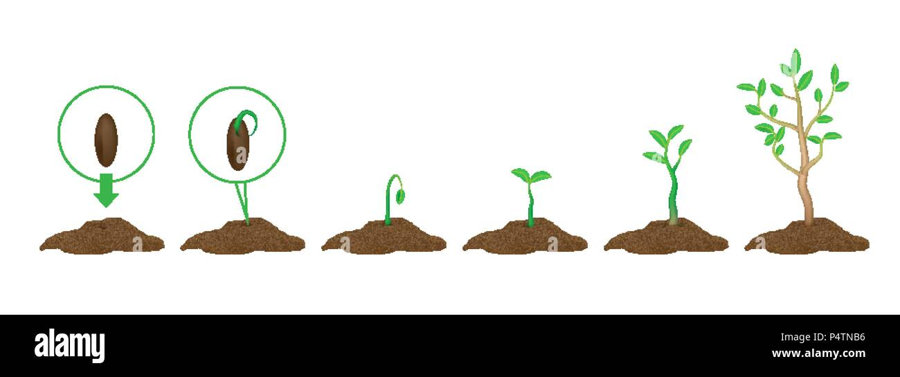 Green shoots with leaves and ground.  - Stock Vector