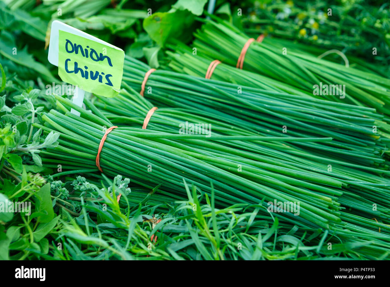 Fresh Onion Chives at a Local Farmer's Market - Stock Image