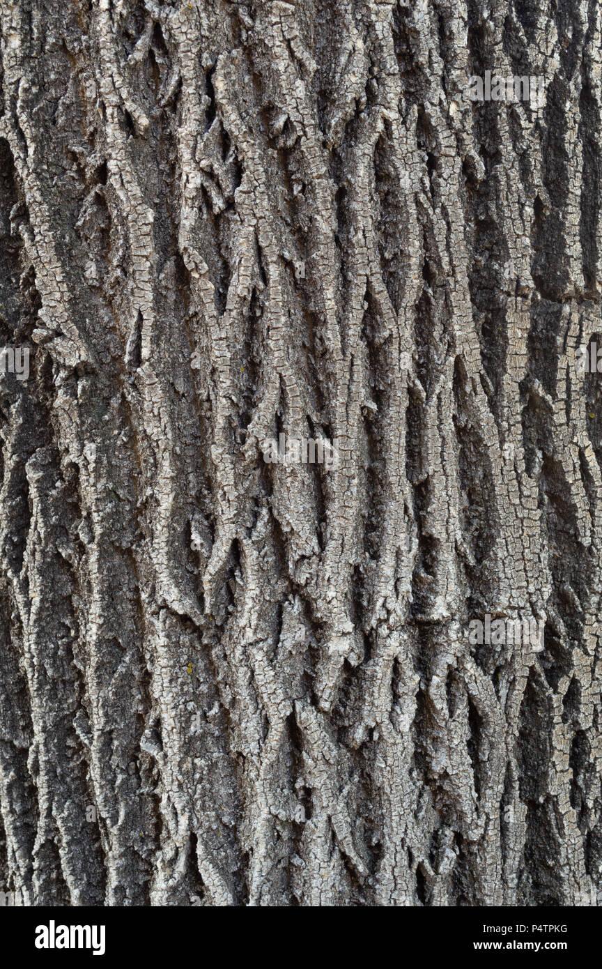 Tree Bark Texture Background - Stock Image