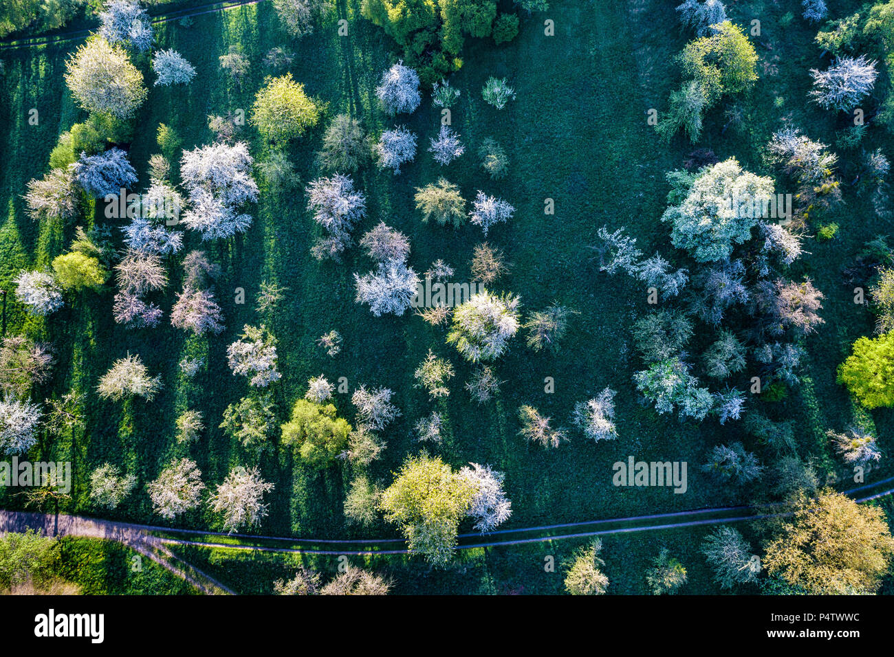 Germany, Baden-Wuerttemberg, Rems Valley, Aerial view of meadow with scattered fruit trees in spring - Stock Image