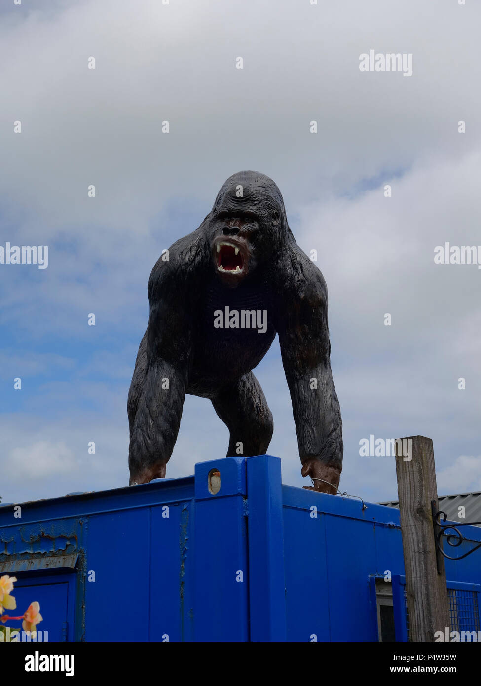 snarling gorilla on a container statue - Stock Image