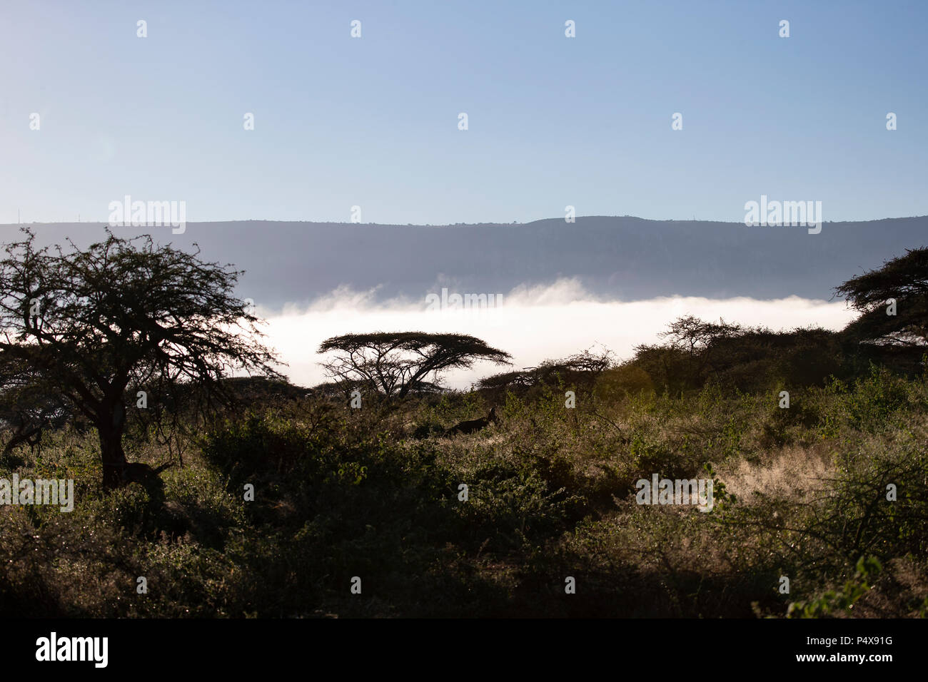Low early morning mist over an African game reserve - Stock Image