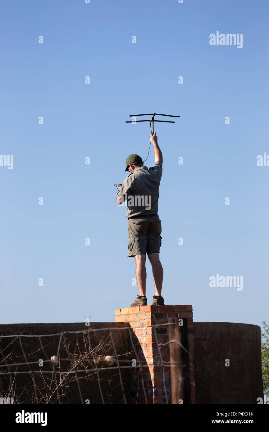 African safari guide using telemetry to track wild animals in the bush - Stock Image