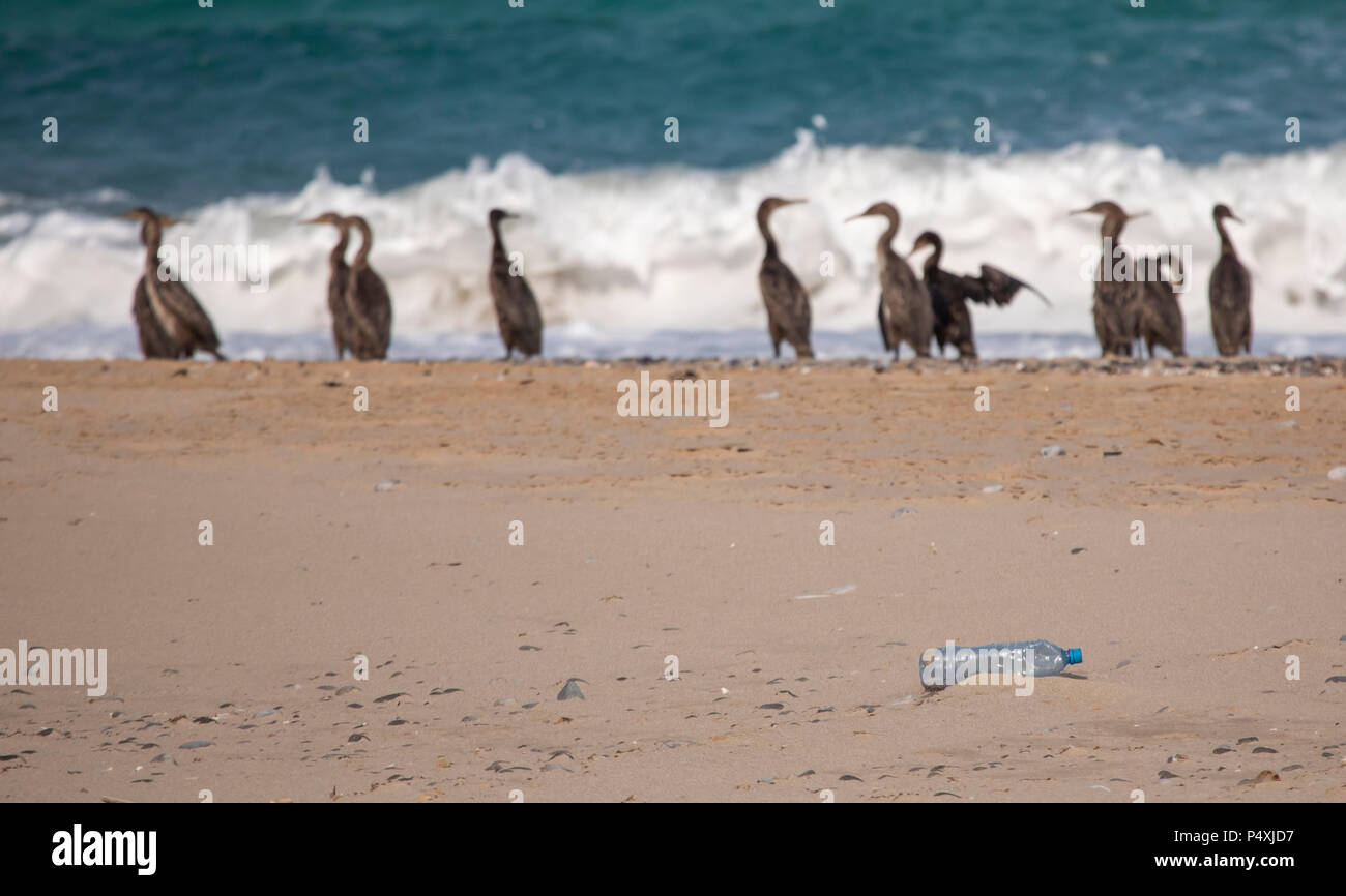 plastic water bottle on cormorant beach of Musandam in Oman, - Stock Image