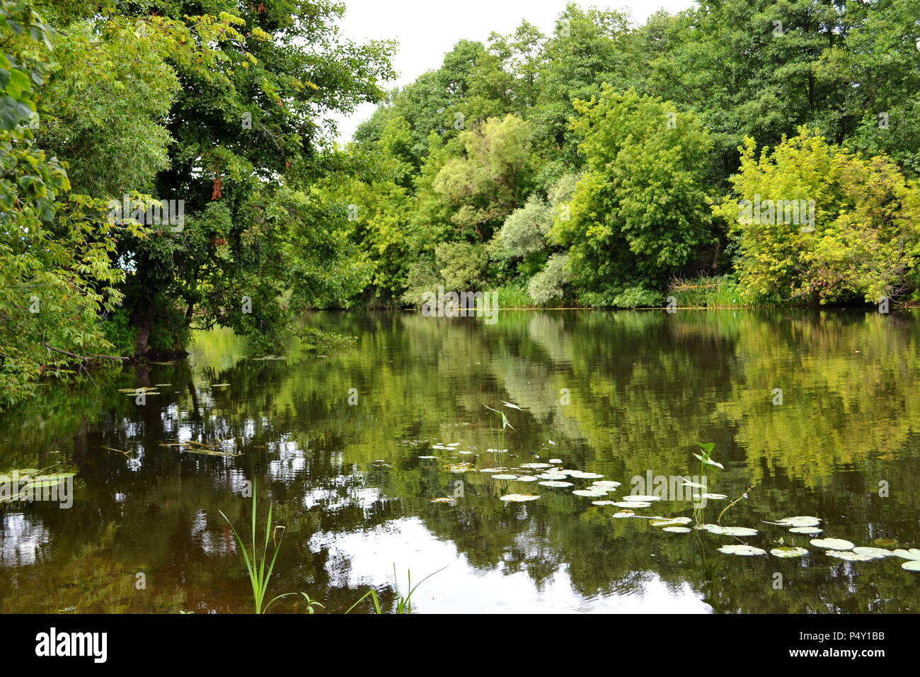 On the bank of a small river sultry summer day - Stock Image