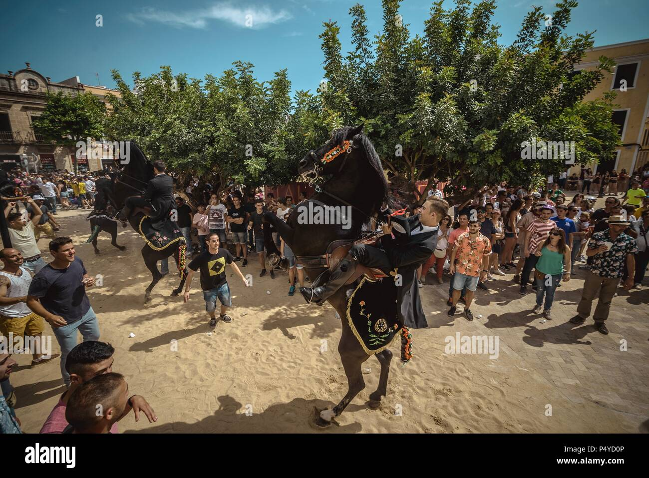 A 'caixer' (horse rider) rears up on his horse surrounded by a cheering crowd prior to the 'Caragol des Born' parade on the eve of the traditional 'Sant Joan' (Saint John) festival in Ciutadella de Menorca Credit: Matthias Oesterle/Alamy Live News - Stock Image