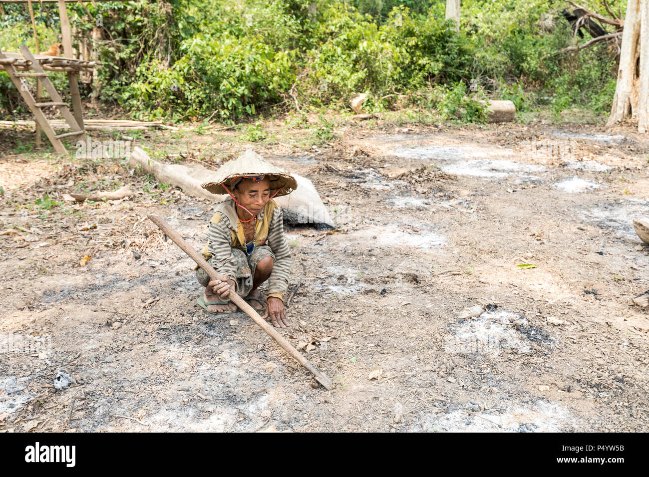 Woman digging in slash and burn cleared field preparing to plant crops, Nong Ping, Laos - Stock Image
