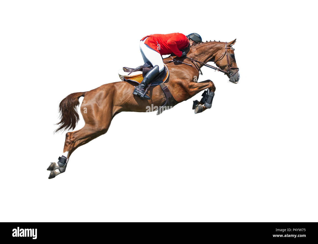 Rider in red jaket on bay horse in jumping show, isolated on white background - Stock Image