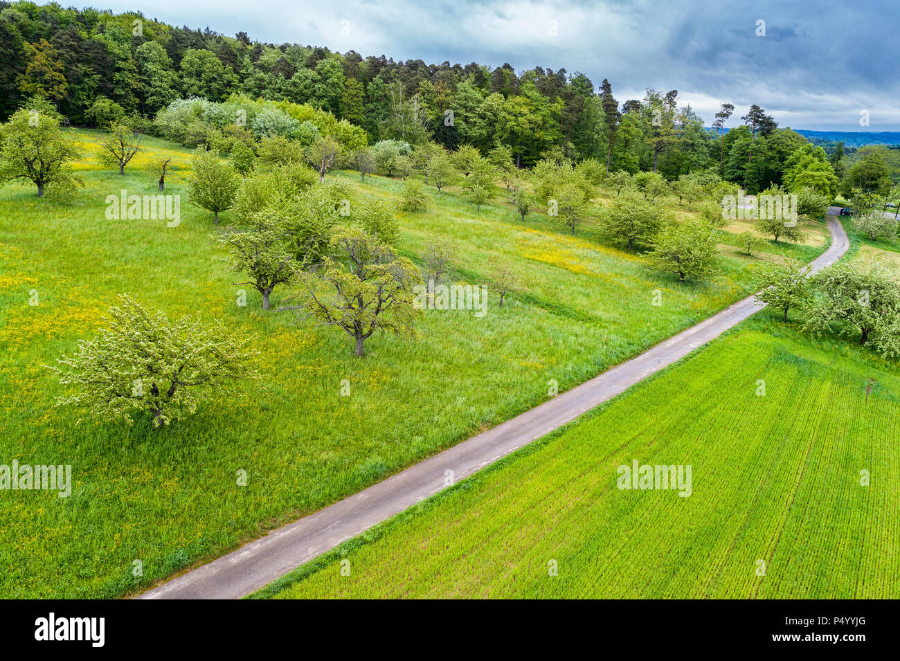 Germany, Baden-Wuerttemberg, Swabian Franconian forest, Rems-Murr-Kreis, Aerial view of meadow with scattered fruit trees and road - Stock Image