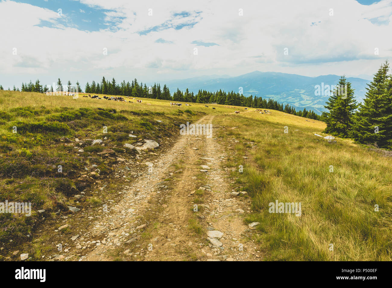Austria, Styria, dirt track on plateau - Stock Image